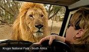 Путешествие в Африку. Туры в ЮАР. Сафари в Африке.